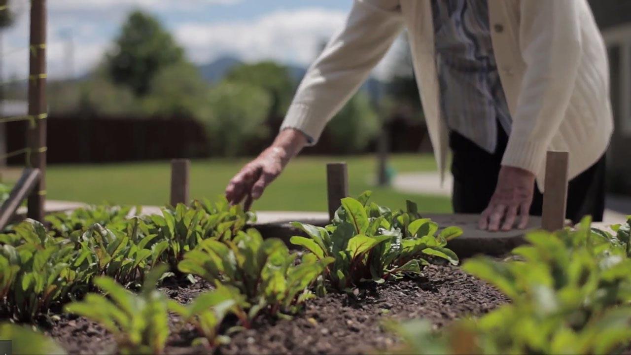 Elderly Gardening