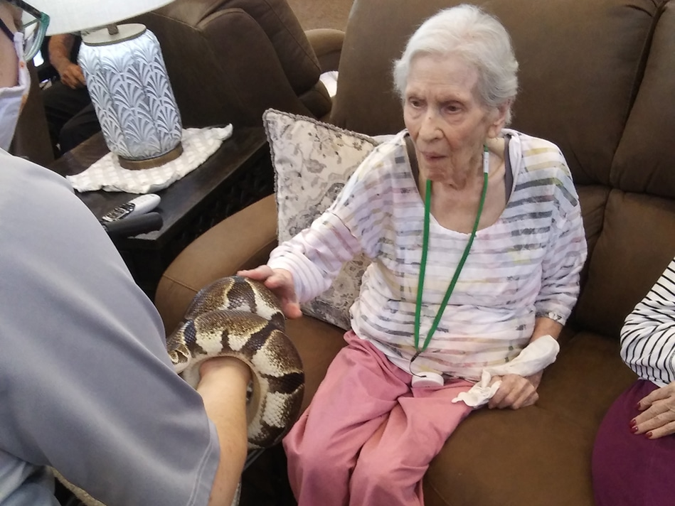 Assisted Living Petting Zoo Snake
