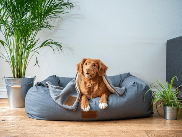 Downsizing with your Dog in Mind
